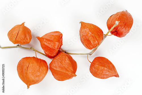 Photo  physalis on white