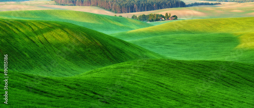 Poster Green spring field. picturesque hilly field. agricultural field in spring