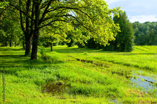 In de dag Lime groen Spring landscape. Green trees and flooded spring lawn in the park in sunny weather