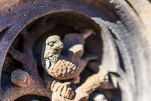Macro Closeup Of Small Bird St...