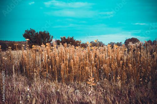 Keuken foto achterwand Turkoois Scenic landscape with field