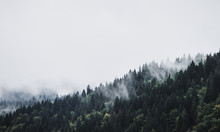 Foggy Mountain Forest Landscape