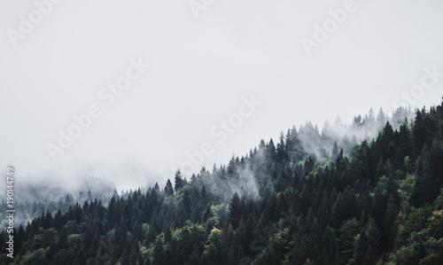 Foggy Mountain Forest Landscape Canvas-taulu