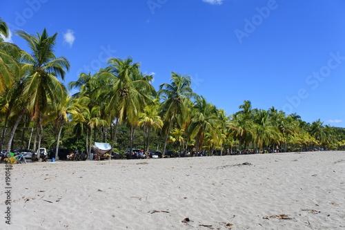 Palm Trees Beach Canvas Print