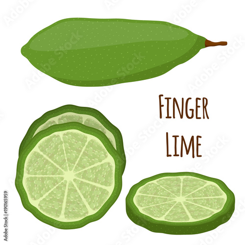Fotografie, Obraz  Vector illustration of Australian finger lime, tropical, exotic plant, spicy food