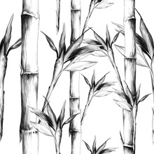 Leaves Branches Stem Bamboo Pa...