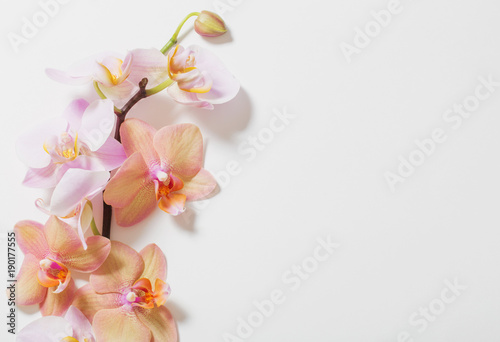 Recess Fitting Orchid orchids on white background