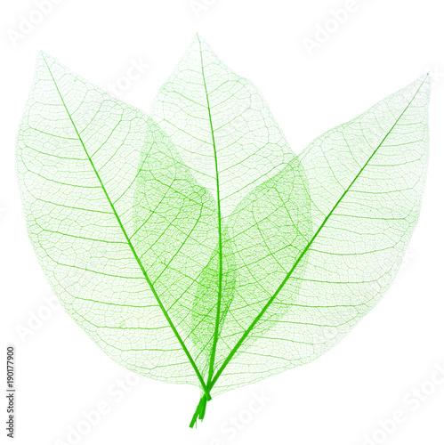 Poster Squelette décoratif de lame feuilles décoratives vertes