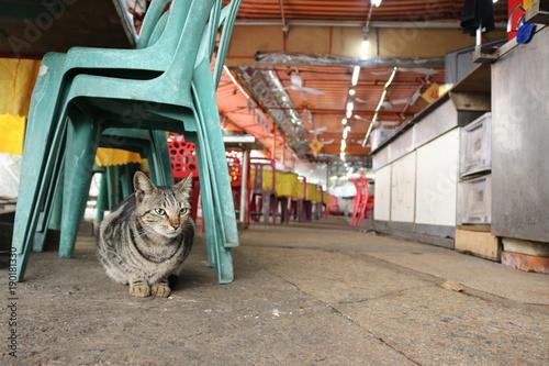 Photo  香港の猫