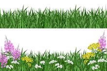 Green Grass And Summer Flowers...