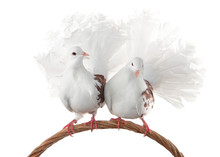A Pair Of Pigeons Sit On A Wov...