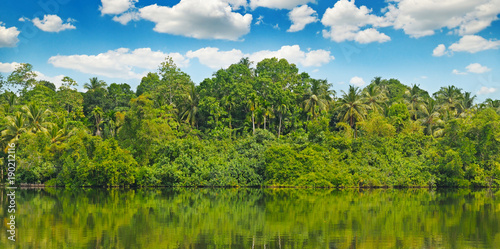 Fotografia Tropical palm forest on the river bank. Wide photo.