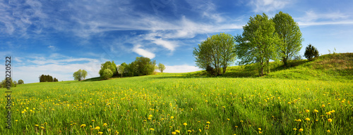 Foto op Plexiglas Weide, Moeras Field with yellow dandelions and blue sky