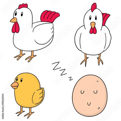Fototapeta vector set of chicken and egg
