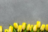 Fototapeta Tulipany - Yellow tulips, spring easter background for mothers day or card for women's day at 8 march
