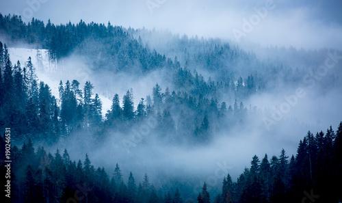 Fotografia, Obraz  mist in winter forest