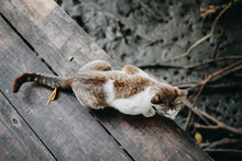Brown Cat Lay Down On Wooden F...