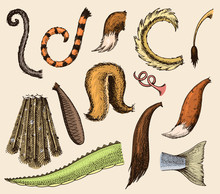 Animal Tail Vector Animalistic...