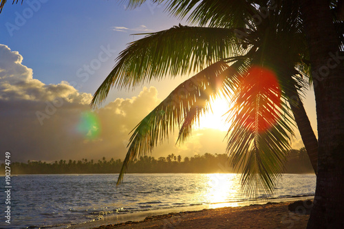 Fotobehang Zwavel geel Tropical sunrise with coconut palm tree.