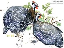 Guinea Fowl Bird Watercolor Il...