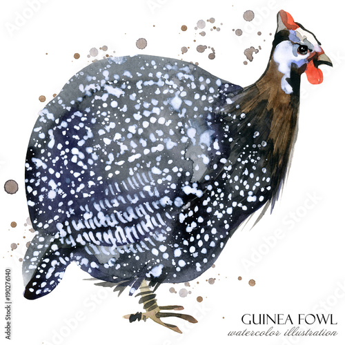 Photo guinea fowl bird watercolor illustration