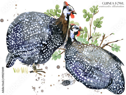Fotografie, Tablou guinea fowl bird watercolor illustration