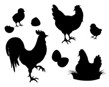 Chicken,rooster,Chicks,eggs, B...