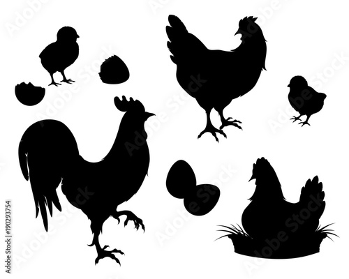 Fotografie, Obraz Chicken,rooster,Chicks,eggs, black silhouette.