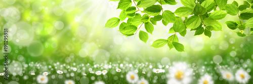 Staande foto Lente Frühling 424