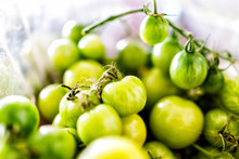 Macro Closeup Of Many Small Unripe Green Tomatoes On Vine From Garden In Plastic Container