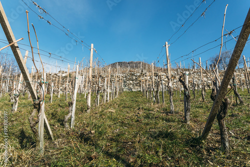 Photo Empty vineyards in Valtellina wine-growing region of Lombardy, Italy