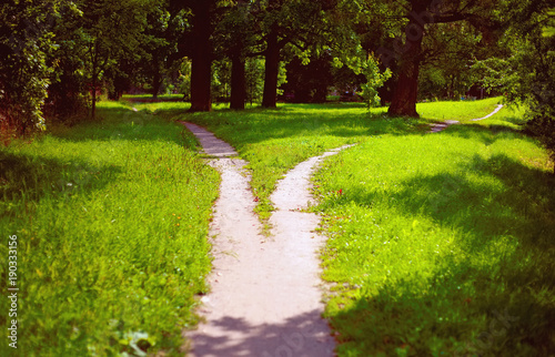 Fotografija  Divergence of paths in the park