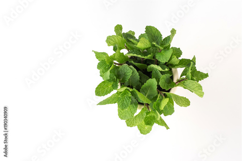 top view fresh mint plant in pot isolate on white background