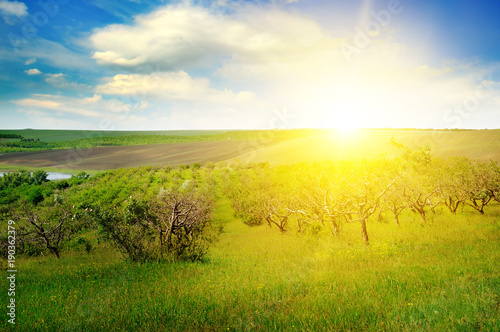 Garden with fruit trees and sunrise.