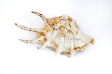 Seashell Of A Snail