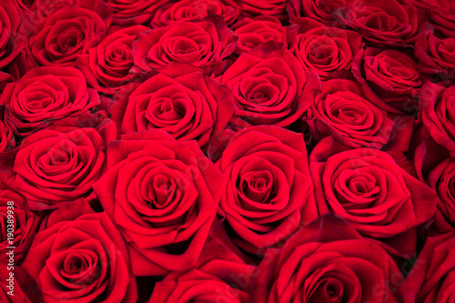 Plakat Bukiet czerwone róże jako tło tekstura