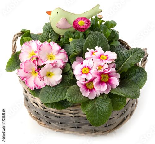 Fruhlingsblumen Mit Deko Vogel Im Pflanzkorb Buy This Stock Photo