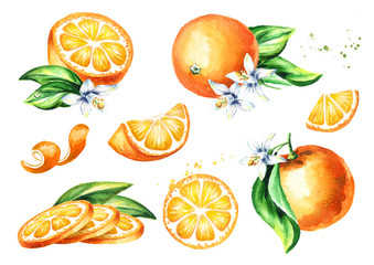 Fresh Orange fruit compositions collection. Watercolor hand drawn illustration, isolated on white background
