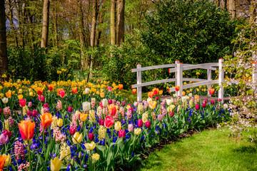 FototapetaBeautiful garden. Park in The Spring. Spring landscape