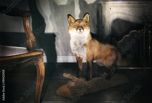 trophée renard, animal sauvage empaillé