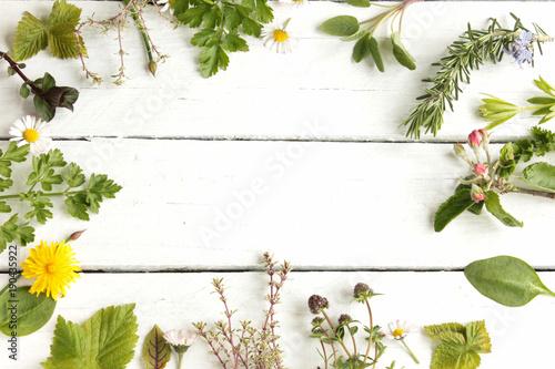 Tuinposter Kruiderij essbare Blüten Blätter Wildkräuter Kräuter Heilkräuter frisch grün Wild