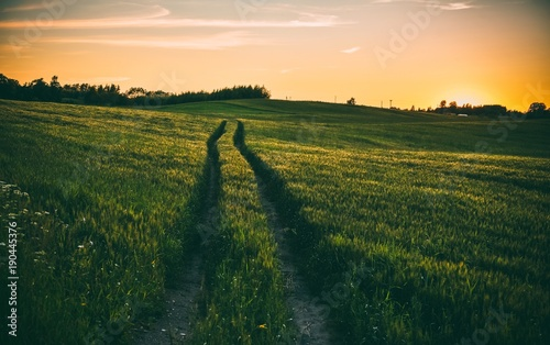 Foto op Plexiglas Weide, Moeras Beautiful autumn landscape with winding road through a green meadow field at sunset