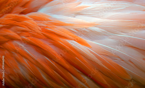 Tuinposter Flamingo Background of Flamingo Feathers