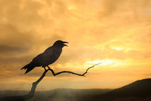 Silhouette Black Crow And Sunset