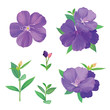 Beautiful purple princess flower or tibouchina urvilleana and leaf on white background. Vector set of blooming floral for wedding invitations and greeting card design.
