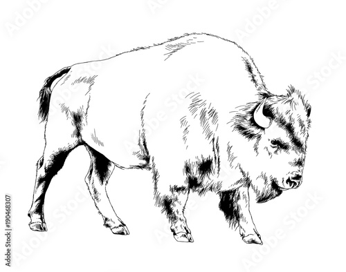 Valokuva  big bison with horns hand-drawn ink sketch tattoo