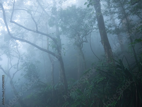 Foto auf Acrylglas Wald im Nebel Tree in the mist in Hong Kong in spring