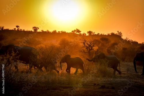 Poster Jaune Silhuoette einer Elefantenherde im Abendlicht