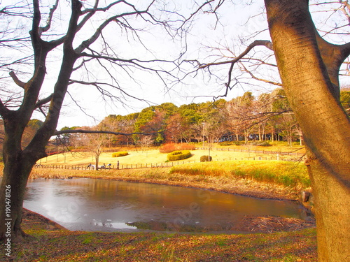 In de dag Zwavel geel The scenery of the park, January, Chiba, Japan