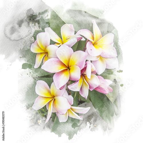 Kwiat plumeria kwiat.